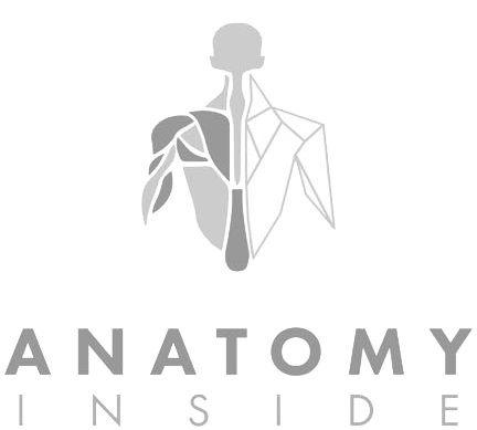 Logo Anatomy Inside