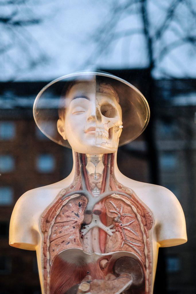 Human Anatomy Demonstration Courses Anatomy Inside